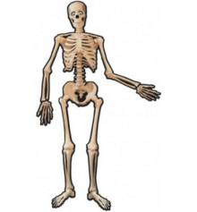 Баннер Halloween Скелет 1,4м купить в интернет магазине подарков ПраздникШоп