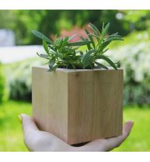 """Экокуб """"Flora Cube"""", лаванда купить в интернет магазине подарков ПраздникШоп"""